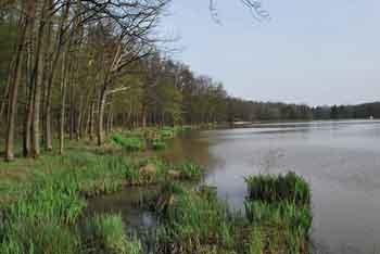 Pri prekmurskem Bukovniškem jezeru se nahaja kapelica svetega Vida s izvirom pozitivne vode.