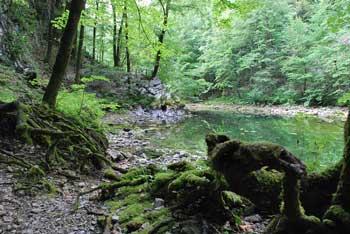 Okoli Divjega jezera v Idrijskem hribovju vodi krožna pot. Iz njega se izliva voda v reko Idrijco.