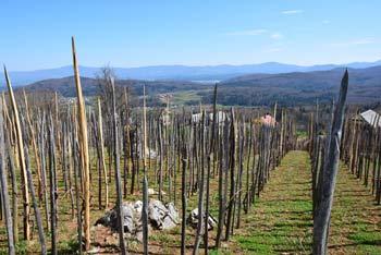 Pobočja Golobinjeka so prekrita s številnimi vinogradi in zidanicami mimo katerih nas vodi pot na vrh.