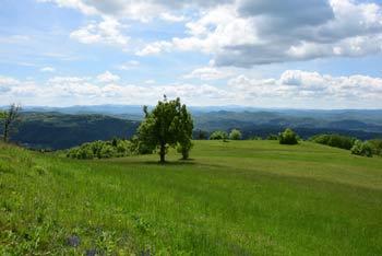 Gradišče nad Višnjo Goro ima razgled na Polževo ter proti Krimu in zahodnih obronkih Posavskega hribovja.