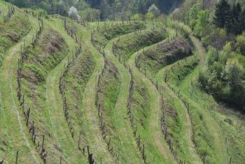 Haloški studenec velja za zdravilnega. Pod izhodiščem so terasasti vinogradi, ki vijugajo po strmih goricah Haloz.
