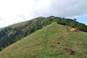 Hruški vrh se nahaja med Dovško babo in Klekom v Zahodnih Karavankah.