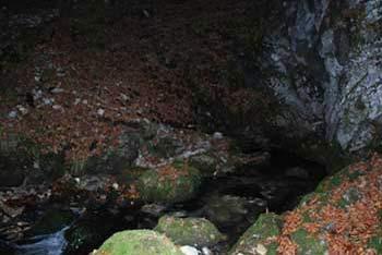 Atkraktivni izvir Ljubije se nahaja v slikoviti soteski med Brloško pečjo in turistično planoto Golte.