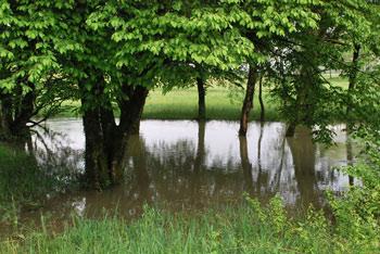Družinski izlet do izvira Okno reke Nerajčiceje je del ostalih potepanj po Beli krajini. Napaja se iz hribovja Poljanske gore.