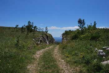 Kavčič je travnat vrh na robu Podgorskega krasa ob hrvaški meji.