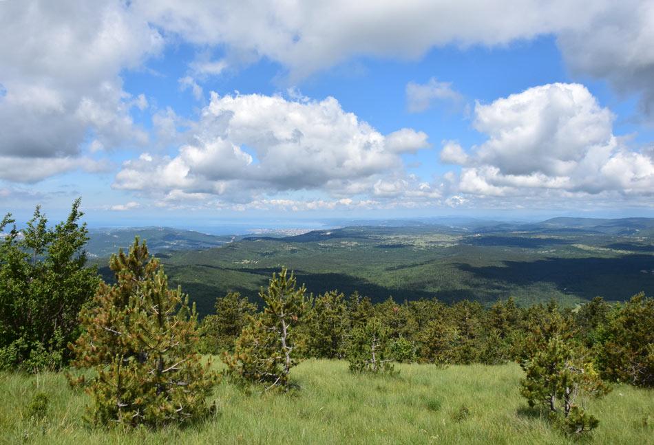 Na Kojniku se prične pot po Podgorskem Krasu proti Goliču in Lipniku.