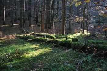Naglbihl je neizrazit vrh sredi gozdov Stojne, izhodišče pa je pri Mestnem vrhu.