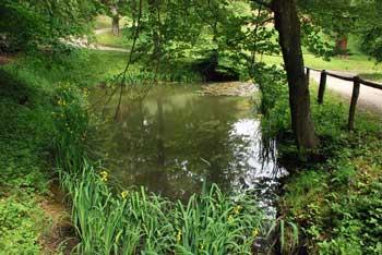 Krožna pot na grad Pišece v Bizeljskem gričevju nas vodi mimo dveh nekoč grajskih ribnikov.