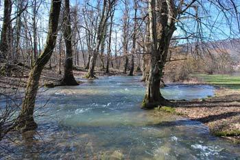 Planinsko polje napaja tudi potok Škratovka, ki se na poti k reki Unici vije med visokimi drevesi.