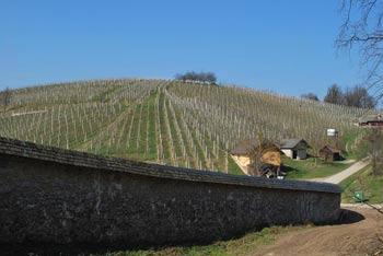 Pleterski hrib se nahaja nad istoimenskim samostanom pod Gorjanci.