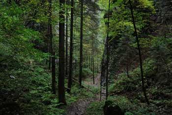 Pokljuška soteska se nahaja v Triglavskem narodnem parku in se zajeda v planoto Pokljuko.