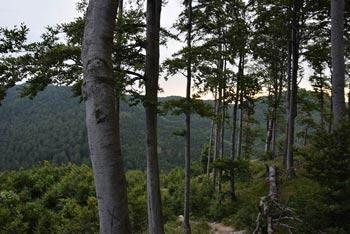 K Poldanovcu se sprehodimo preko gozdov Trnovskega gozda na prepadne Govce nad Gorenjo Trebušo.