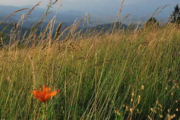 Sveti Ožbolt se nahaja na razglednem polhograjskem grebenu.
