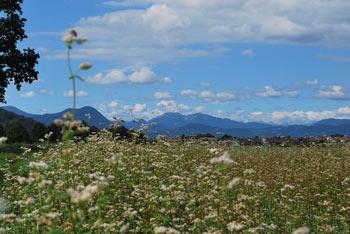 Pod Spodnjimi Pirničami se nahaja krajinska posebnost toplica Straža.