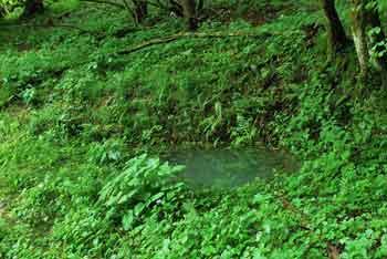 Travnice je manjše kraško polje blizu Trebnega vrha.