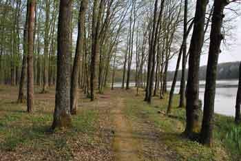 Bukovniško jezero je zdravilen gaj znan po številnih izvirih pozitivnih energij in kapelici svetega Vida.