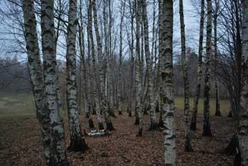 Črna glava se nahaja na vzhodnem robu Banjšič nad dolino Čepovan.