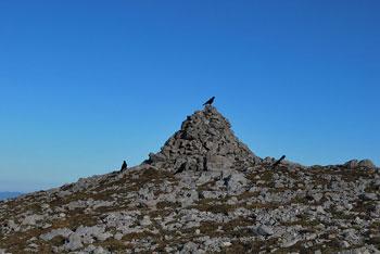 Dleskovec je zaobljen vrh južno od Moličke peči, Velikega vrha in Velike Zelenice.