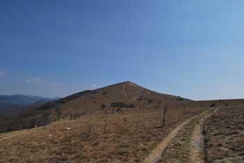 Golič je navišji vrh Podgorskega Krasa med Kojnikom in Žbevnico.