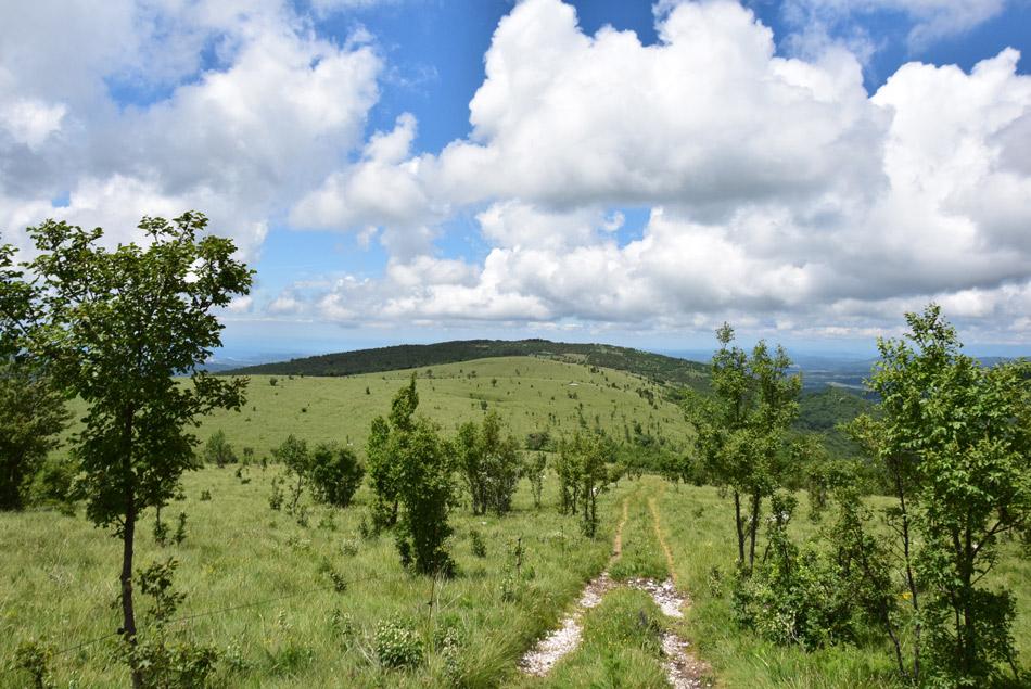 Na Goliču se odpre razgled po travnati planoti pod Čičarijo in nad Istro, kjer izsxtopa Učka.