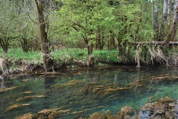 Izvir Ribnice se nahaja pod Veliko goro.