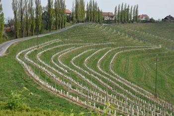 Jeruzalemske gorice so svet zavitih, terasastih goric, kjer v vrhunskem vinorodnem okolju pridelujejo ena naših najboljših belih vin.