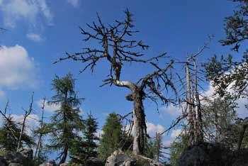 Kozji vrh je manj obiskana gora za Storžičem in Cjanovco.