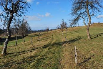 Mali Trebelnik pri Pokojišču je na robu Menišije nad Ljubljanskim barjem.