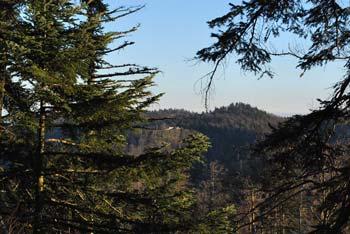 Nad Jelenovim Studencem na Stojni se nahaja Mestni vrh na katerega vodi krožna pot. Na poti se vidi Fridrihštajn.
