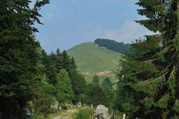 Na Mrzlem vrhu se nahajajo pašniki, vrh pa je razgleden proti Furlaniji in zahodnim  Julijskim Alpam..
