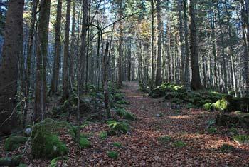 Nagelbihl  je gozdnati vrh na Stojni. Pot nas vodi skozi globoki gozd tudi mimo Ledene jame.