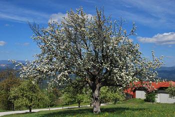 Iz Obolnega se odpirajo razgledi na Kamniško-Savinjske snežnike in proti Zasavju in na Ribniško-Kočevske kraške planote.