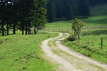Preko planina Dol, ki se nahaja med Konjem, Rzenikom in Veliko planino se vije makadamska cesta ob kateri se pase čreda krav.