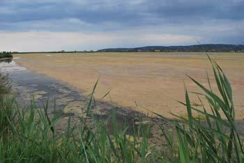 Izliv Dragonje v morje na koncu Sečoveljskih solin nas preseneti s svojo lepoto.