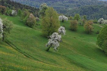 Povečana kopija situale iz Vač stoji v vasi Klenik nedaleč stran od najdišča v vasi Klenik.