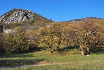 Vitovsko jezero je edino naravno jezero v Vipavski dolini. Marko Pogačnik pravi, da lahko ob njemu začutimo vilinska bitja.