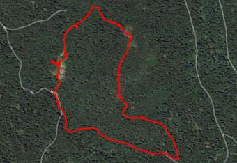 Skozi gozd Mestnega vrha se bomo lažje orientirali s pomočjo gps sledi.